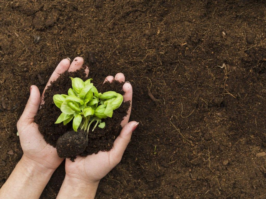 O que a Agropecuária Carboni faz para diminuir o impacto ambiental? 2429652