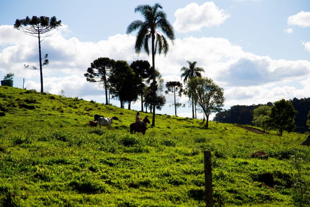 O que a Agropecuária Carboni faz para diminuir o impacto ambiental? IMG 1110
