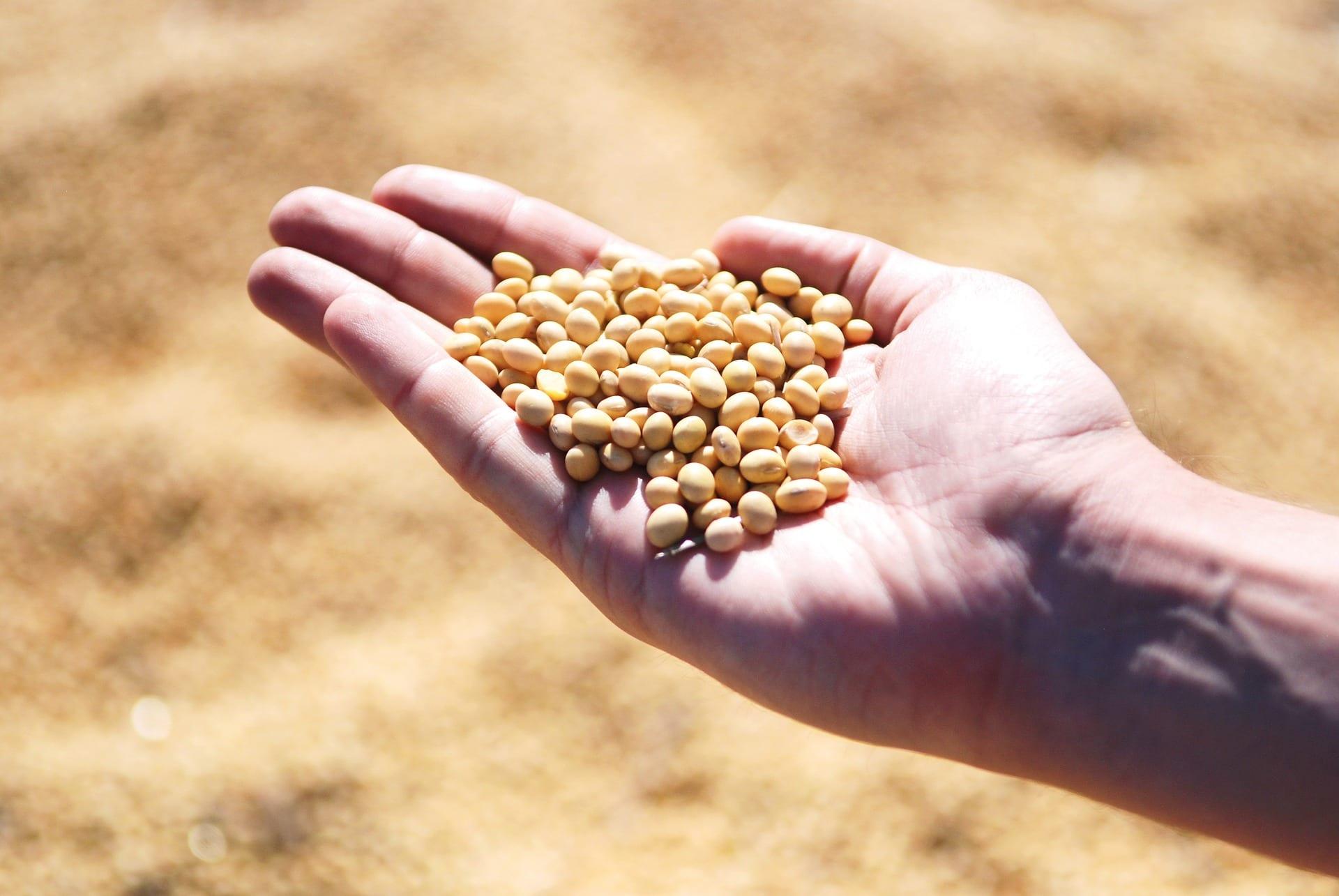 Agropecuária Carboni produzirá Ração Bovina em parceria com a Ecológica