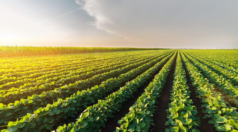 Novo Plano Safra destina R$251 bilhões para financiar a agricultura plantacao de soja