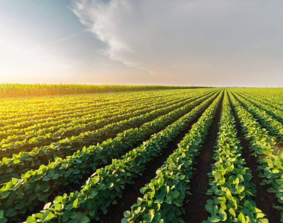 Novo Plano Safra destina R$251 bilhões para financiar a agricultura