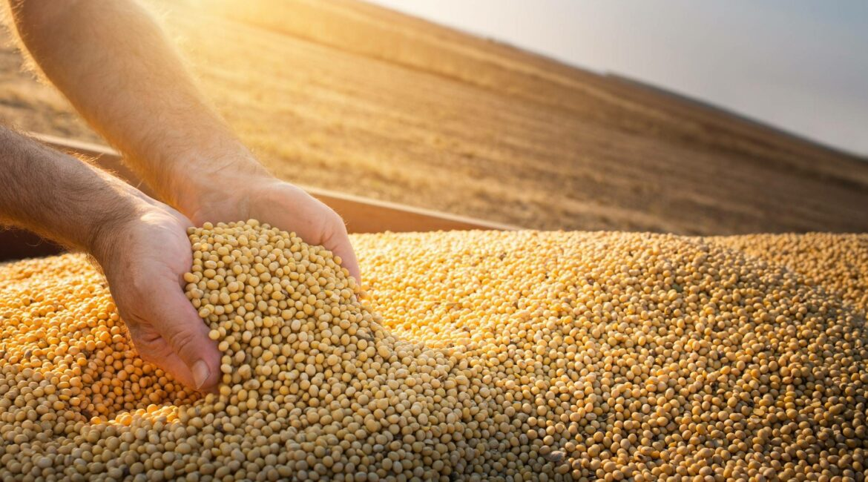 Carboni Case participará da Abertura Nacional do Plantio da Soja soja2