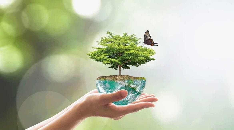 Proteger o Meio Ambiente é um dos compromissos da Carboni Preservacao do Meio Ambiente