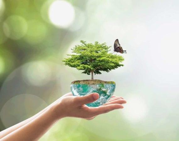 Proteger o Meio Ambiente é um dos compromissos da Carboni